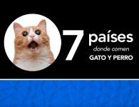 7 países donde comen perro y gato